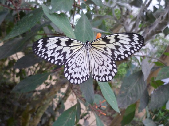 The North Somerset Butterfly House: perfect creature