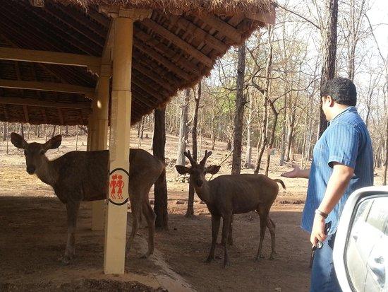Deer Park: Calm Deers !!!!