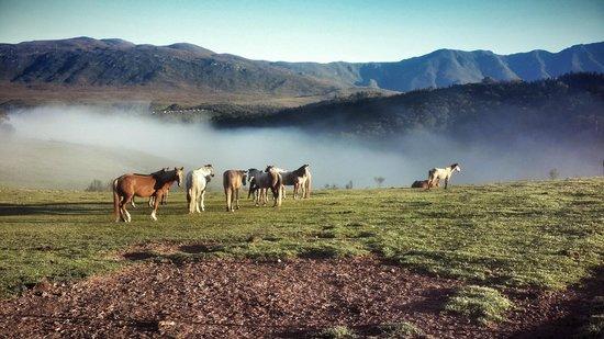 Honeywood Farm : Farm horse and view of mountain