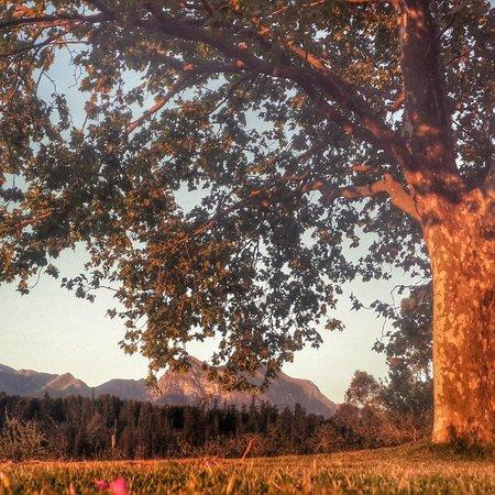 Honeywood Farm : Main farmhouse oaktree