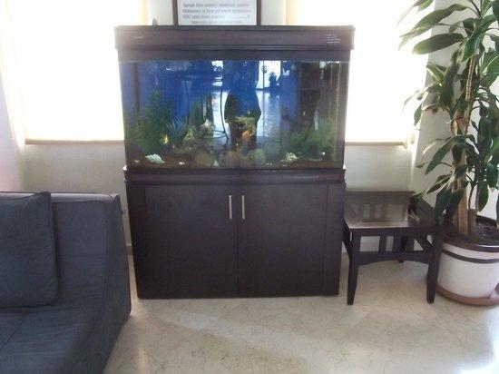 Gardenia Beach Hotel: Рыбки