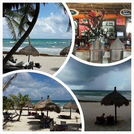La Zebra Beach Restaurant and Tequila Bar: A few shots from La Zebra