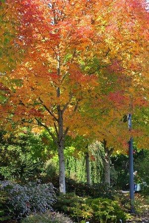 Oregon Garden: Fall color