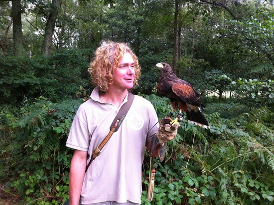 East Sussex Falconry: Gerard with Ash the Harris Hawk
