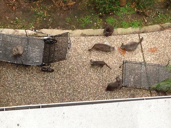 Greenway Inn & Suites: vista do apartamento - muitos gatos vivem ali