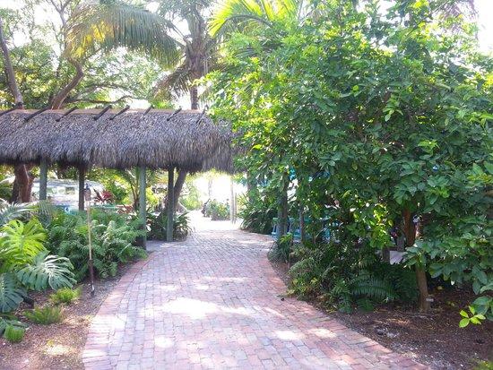 Pierre's : Side Entrance/Garden
