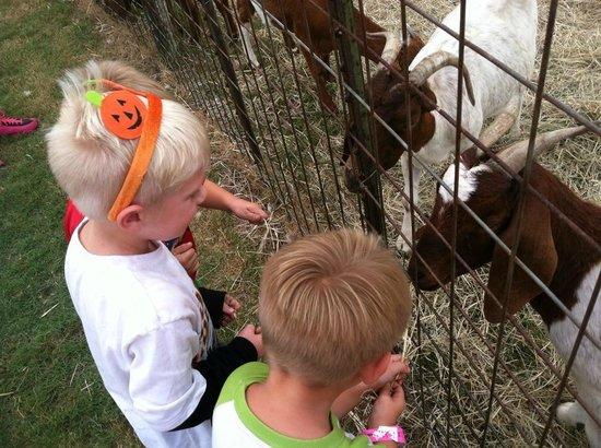 Dewberry Farm: Feeding goats