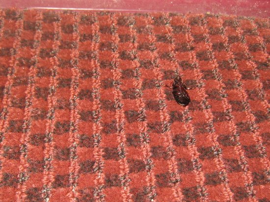 Red Roof Inn San Antonio I-10 East : 1 of 2 DEAD ROACHES ON FILTHY FLOOR IN FILTHY ROOM