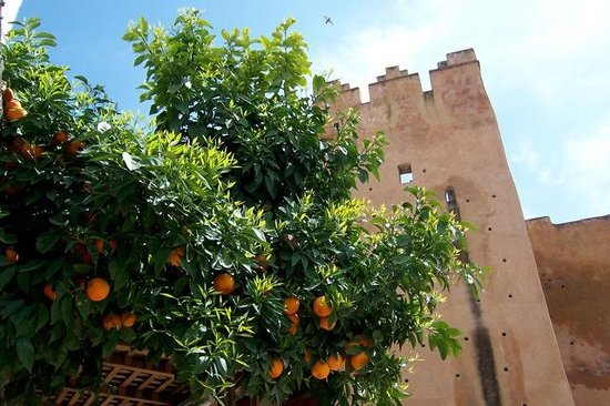 Kasbah Museum : Oranges and The Castle