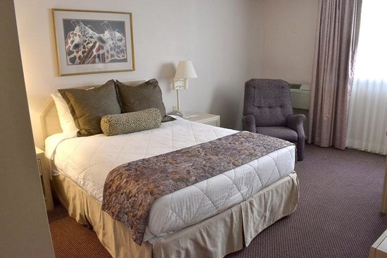 Safari Inn Downtown: Room with One Queen Bed