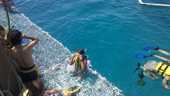 Great Adventures : going snorkeling on the Great Barrier Reef