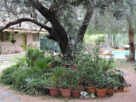 Cerro Del Valle Hotel Rustico: un lindo jardín