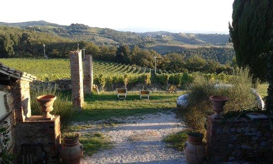 Fattoria del Colle - Agriturismo: i filari