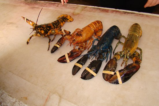 Ryer Lobsters: If you ask, they'll show you the blue one