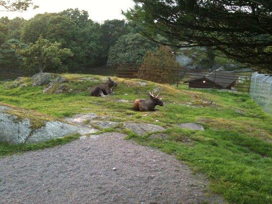 Slottsskogen: Pleasant surprise