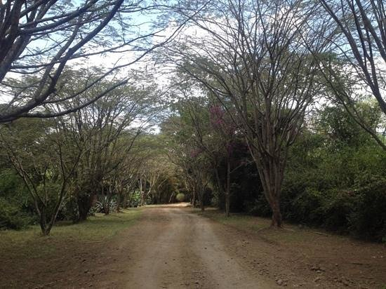 Moivaro Lodge: Driveway up the the lodge