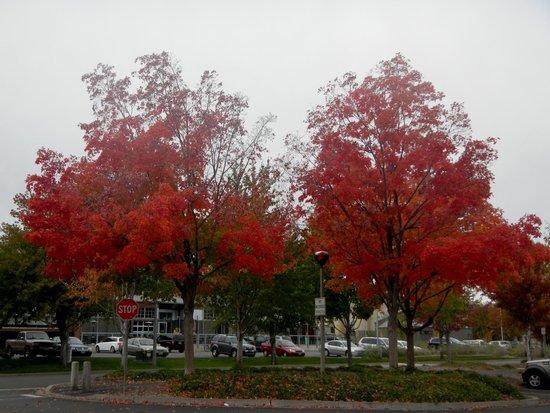 Apple Capital Loop Trail: Beautiful fall in parking lot of Riverfront Park