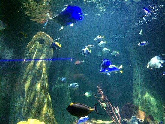 ... do aquario - Foto di National Sea Life Centre, Bray - TripAdvisor