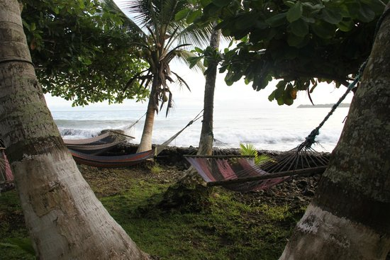 Spencer's Seaside Lodge: hammocks in front of the lodge