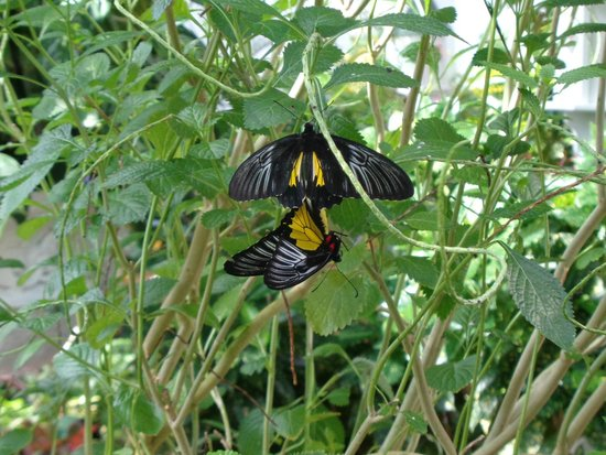 Key West Butterfly And Nature Conservatory Reviews