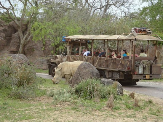 Safari Helicopter Tours Reviews