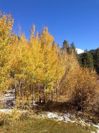 Marriott's Mountain Valley Lodge at Breckenridge : Golden Aspens in October