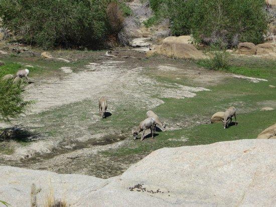 Barker Dam Trail: Lucky Find