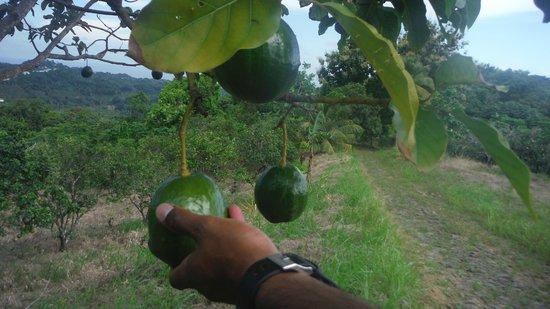 ATV Paradise Tours: fresh fruit everywhere