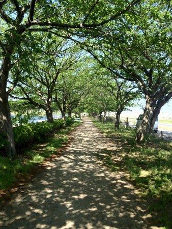Kondonuma Park