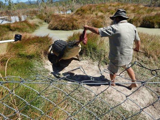 Airlie Beach Day Trips - Bredl's Wild Farm Visit