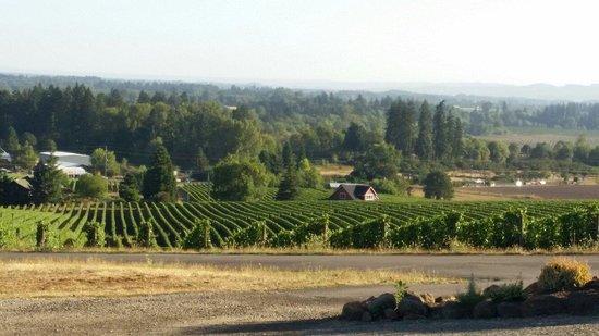 Vineyards of Sokol Blosser Winery