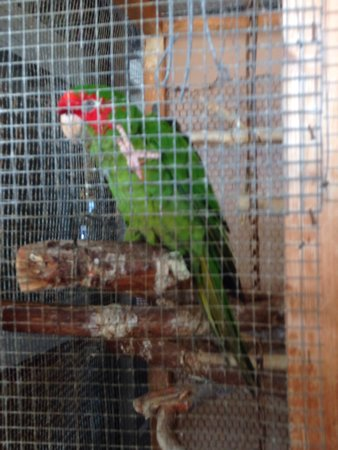 Tropical Paradise Bar: Frederico resident parrot