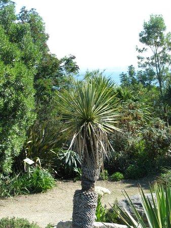 Plantes subtropicales picture of jardin exotique et for Bd du jardin botanique