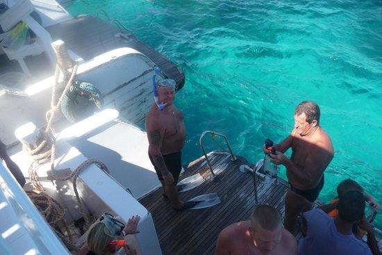Snorkeling, dauphins