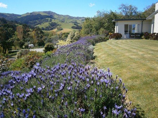 L'Abri: Lavender