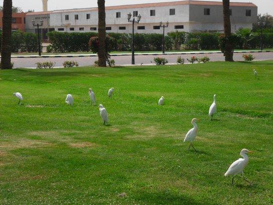 Golden 5 Topaz Suites Hotel : птички