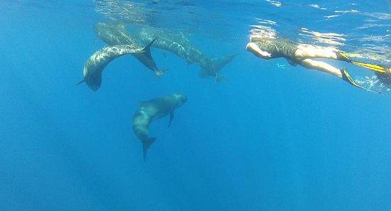 Nager avec les dauphins mandelieu la napoule aktuelle for Nager avec les dauphins nice