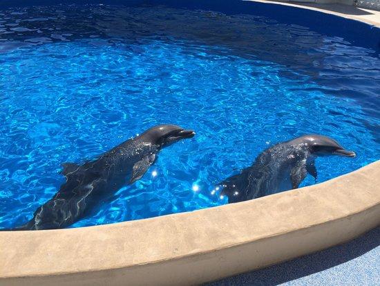 Marineland Dolphin Adventure: Dolphins need a buddy!
