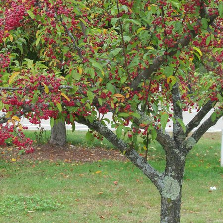 Lancaster, Массачусетс: Be sure to admire the lovely crab apple trees.
