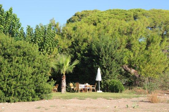 Arcadia Hotel: Breakfast in the sunshine