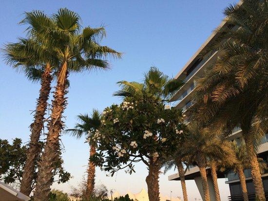 Park Inn by Radisson Abu Dhabi Yas Island: Пальмы у бассейна