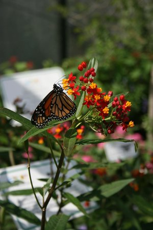 Butterfly garden picture of epcot orlando tripadvisor for Butterfly garden orlando