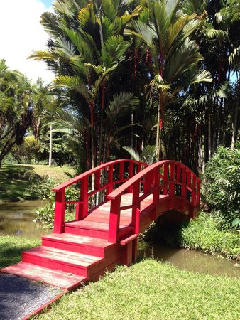 Jardin Botanico: One of the many step bridges.