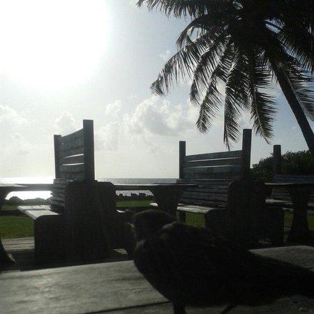 Costa de Cocos: Excelente vista