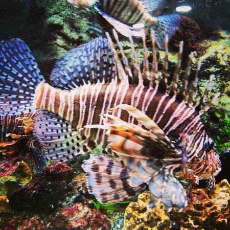 Starfish picture of georgia aquarium atlanta tripadvisor for Georgia freshwater fish