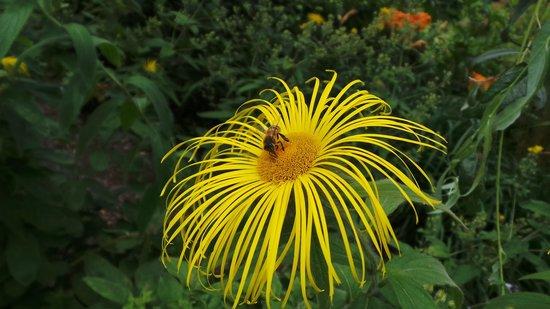 Winterbourne House and Garden: Summer flower