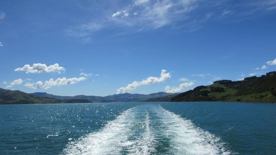 Swim with Dolphins Akaroa - Black Cat Cruises: Desde el barco