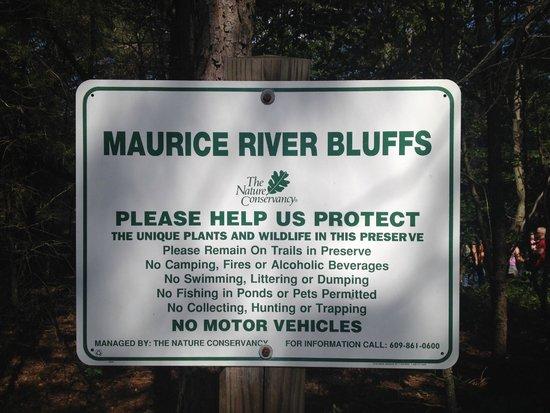 Maurice River Bluffs  Nature Preserve: Maurice River Bluffs
