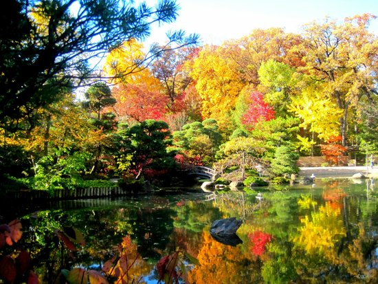 Fall Color Picture Of Anderson Japanese Gardens Rockford