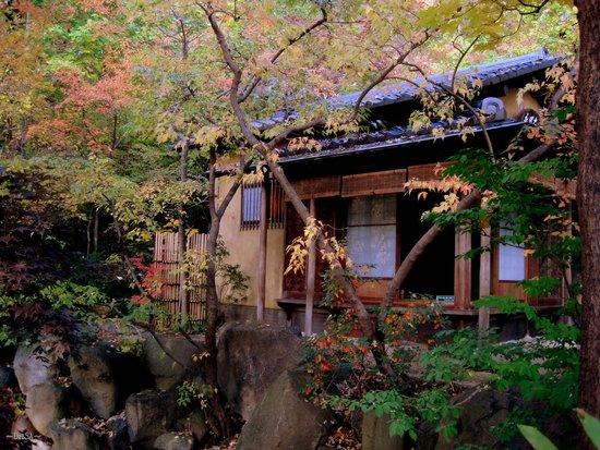 Koi Picture Of Anderson Japanese Gardens Rockford Tripadvisor